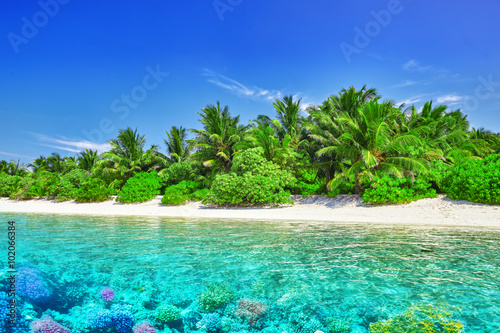 Foto  Tropical island and the underwater world in the Maldives. Thoddo