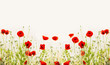Red poppies, outdoor floral nature background, banner