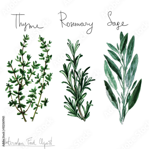 Photo sur Aluminium Illustration Aquarelle Watercolor Food Clipart - Herbs