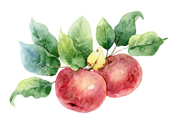 Plakat Two red watercolor apples