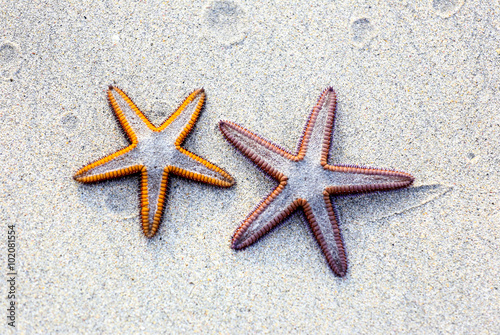 Fotografie, Obraz  Two starfish on sand background on a beach.