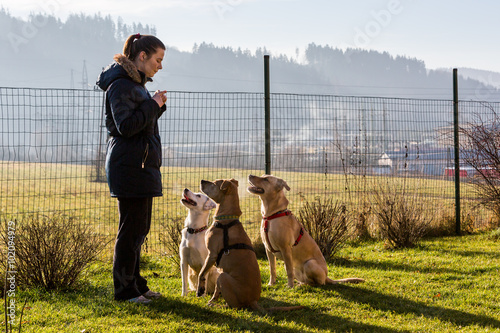 Slika na platnu Woman instructing dogs outside