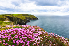 Ireland Seascape