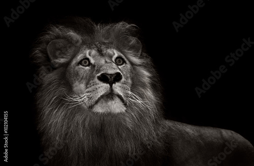 Foto op Plexiglas Leeuw black and white lion