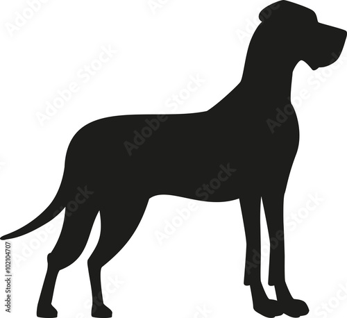 Αφίσα  Great dane black silhouette