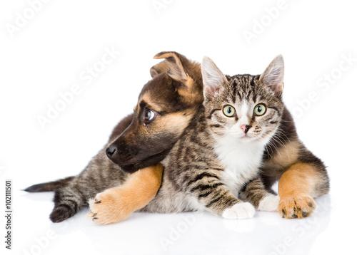 szczaeniak-i-kot-wspolnie-przytuleni-do-siebie