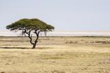 Fototapeta Sawanna - Etosha National Park