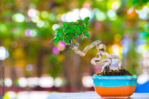 Fotobehang Bonsai Close up shot bonsai on bokeh background