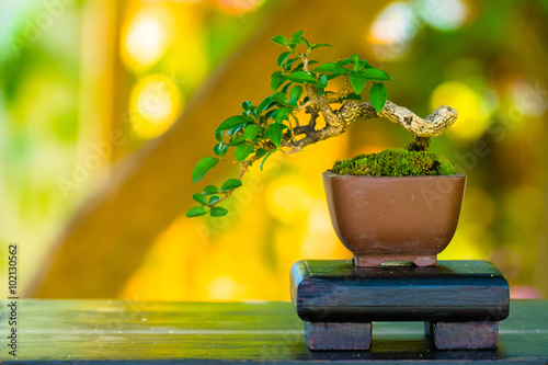 Montage in der Fensternische Bonsai Close up shot bonsai on bokeh background