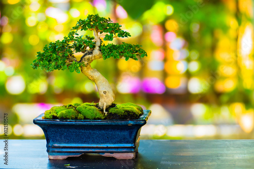 Photo Stands Bonsai Close up shot bonsai on bokeh background