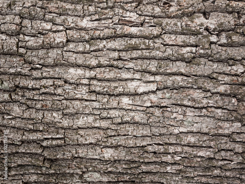 Photo bark tree texture