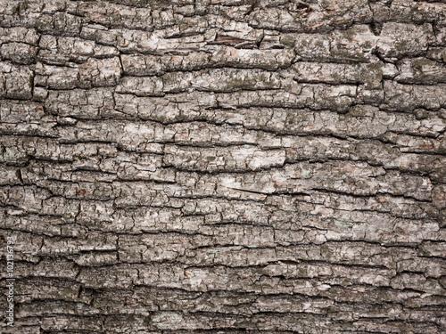 bark tree texture Canvas Print