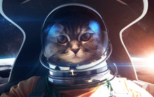 Brave Cat Astronaut In The Spa...