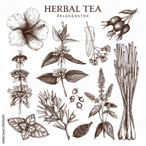 Fotografie, Obraz  Botanical collection of hand drawn herbal tea ingredients