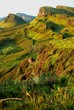 quiraing with tree