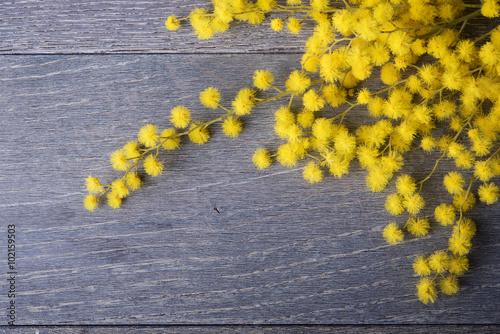 Fresh mimosa flower on table