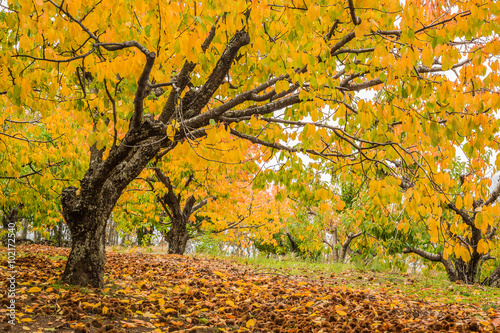 Fotografía  otoño jerte