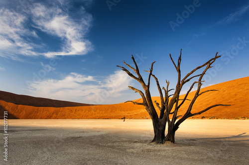 Photo sur Aluminium Desert de sable Dead tree in Sossusvlei, in the Namib Desert, Namibia