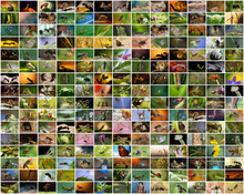 A Collage Of Photos Of Insects. Closeup - Wasps, Ants, Bees, Praying Mantises, Beetles, Caterpillars And Other Naskomye. Background Or Screen Saver For Your Site