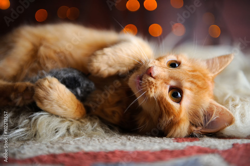Photo Cute Fluffy Red Kitten Playing with Toy Mouse