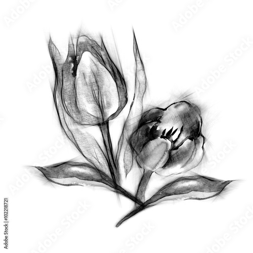 Leinwand Poster Seamless Pattern of Sketched Tulips