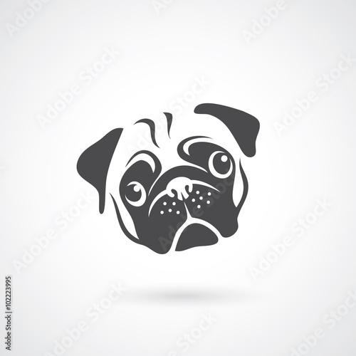 Fotomural Pug dog face