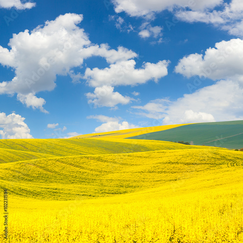 Papiers peints Orange Waves hills landscape of colorful fields and beautiful blue sky