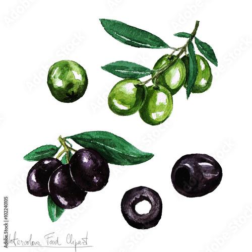 Fotografie, Obraz  Watercolor Food Clipart - Olive