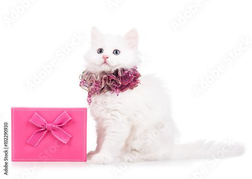 Fotografie, Obraz Roztomilý načechraný kotě