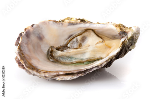 Poster Coquillage Fresh opened oyster isolated on white background