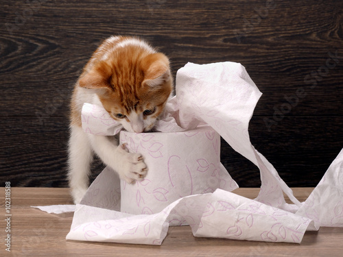 Canvas Print Cat and toilet paper