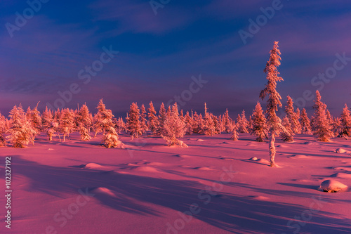 Foto op Aluminium Aubergine Winter landscape with forest, clouds on the blue sky and sun