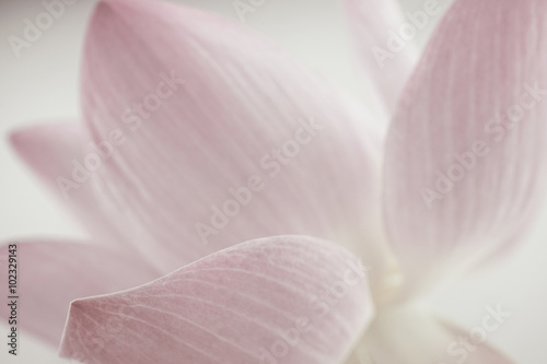 Foto op Aluminium Lotusbloem pink lotus in soft color and blur style for background