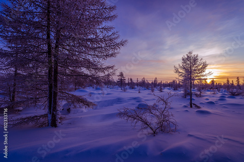 Foto op Plexiglas Aubergine Winter landscape with forest, clouds on the blue sky and sun