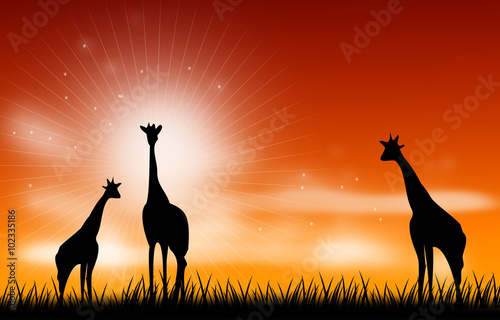 Giraffee scene illustration