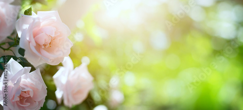 Fotobehang Zwavel geel art Abstract spring or summer floral background