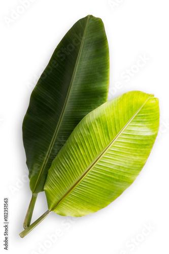 bananowy-lisc-odizolowywajacy-na-bialym-tle-plik-zawiera-sciezke-obcinania