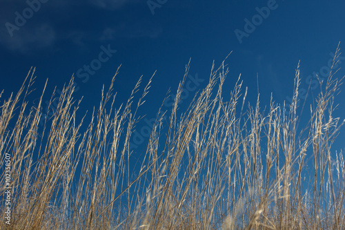 High grass on wind at blue sky
