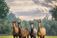 Four Horses Equine Friends Her...