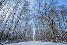 Landscape Of A Snow Covered Forest.