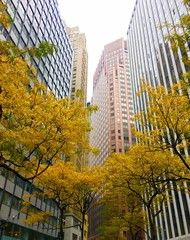 Fototapeta Financial district in autumn