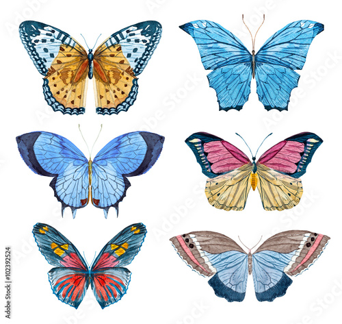 Fotografie, Obraz  Watercolor raster butterflies