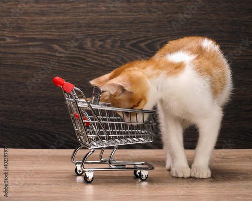 Grocery supermarket trolley  A small kitten looks in an