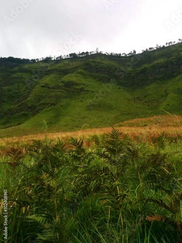 Aluminium Prints Flower shop Bright green scenery in caldera Tengger, near Bromo volcano. Field of fern.
