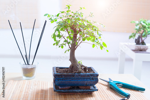 Foto op Aluminium Bonsai Small bonsai tree