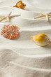 starfish and and shells on sand, summer concept