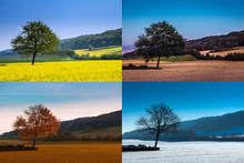 Baum In Vier Jahreszeiten, Collage