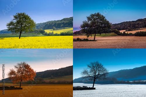Foto  Baum in vier Jahreszeiten, Collage