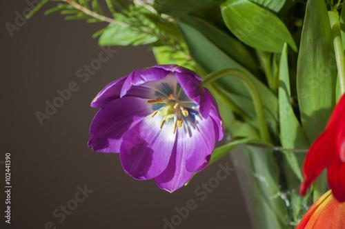 Fototapety, obrazy: Vaso con fiori