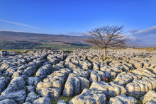 Limestone Pavement In The Yorkshire Dales
